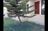 VL383,  Villa Jardin a louer Keur Gorgui Dakar